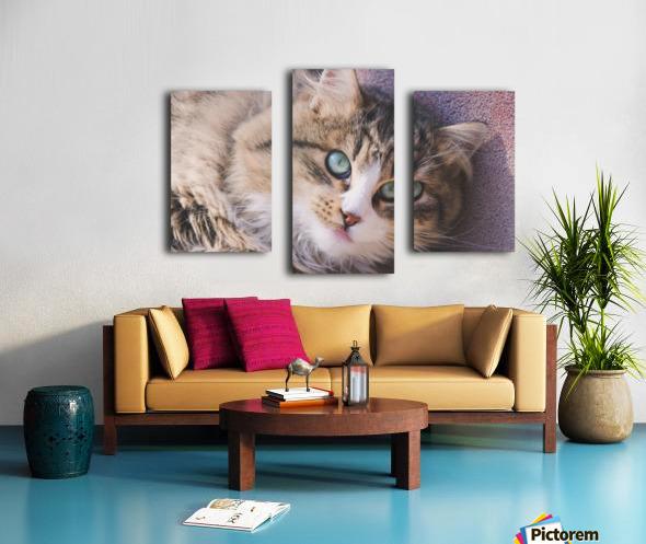 March Cat Canvas print