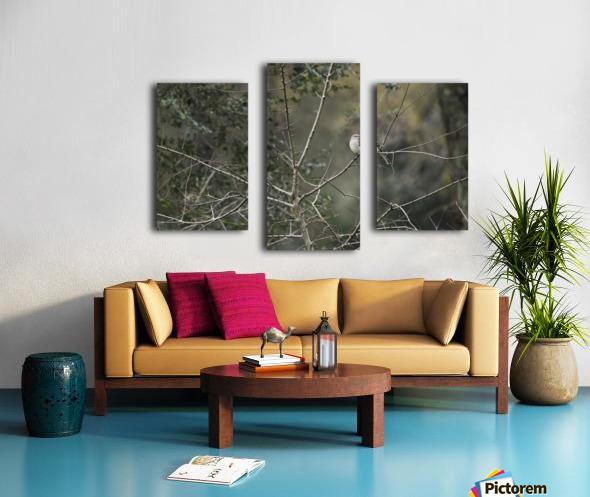 Resting Mockingbird Canvas print