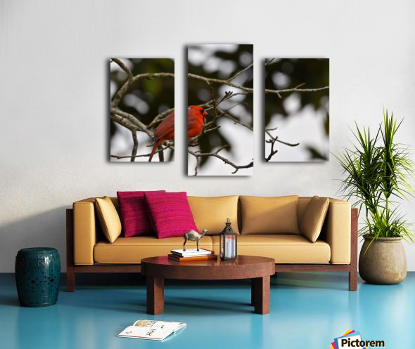 Cardinals 4 Canvas print