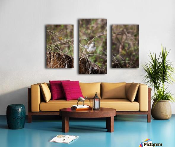 Angry Mockingbird 3 Canvas print