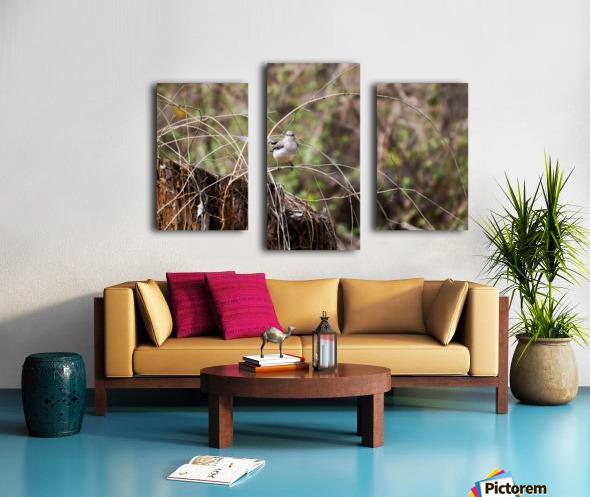 Angry Mockingbird 2 Canvas print