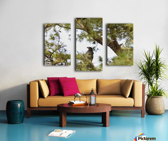 Baby Eagle Canvas print