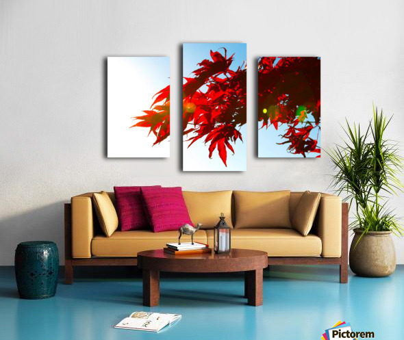 Chinese Maple Canvas print
