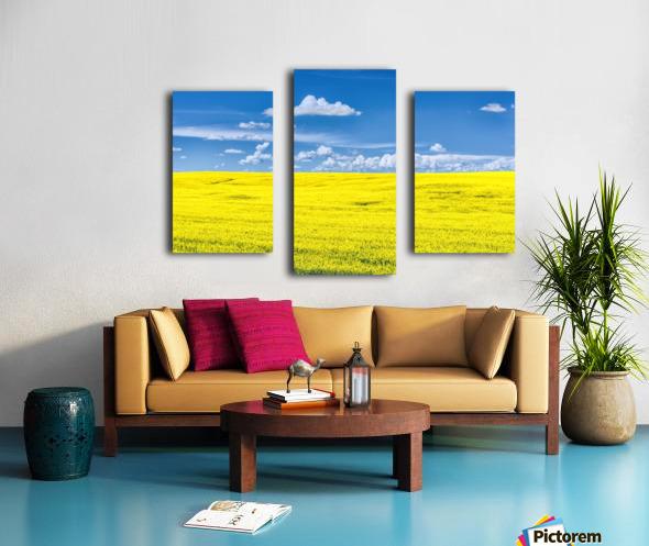 Canola Field  Canvas print