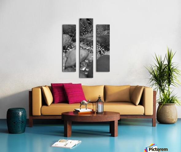 Spiderweb Raindrops B&W Canvas print