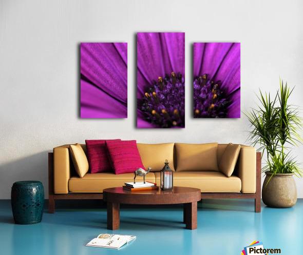 Purple Osteospermum Daisy Photograph Macro Canvas print