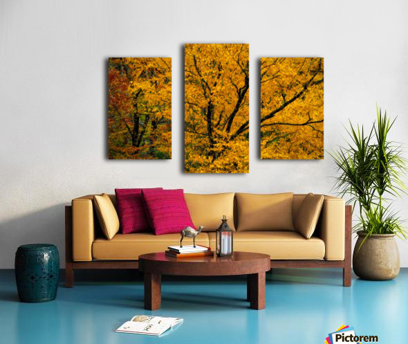 Yellow Tree Leaves Canvas print