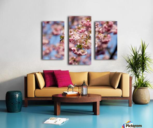 Cherry blossom Red Canvas print