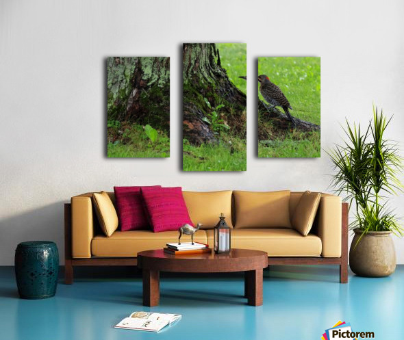 Pic flamboyant  Canvas print