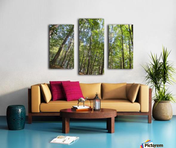 Landscape (249) Canvas print