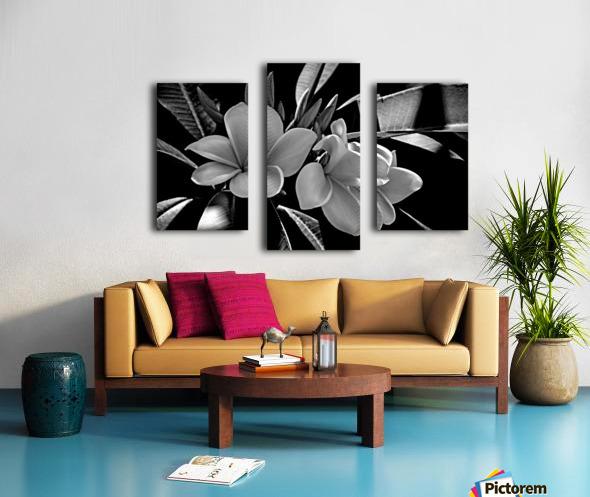 Plumeria In Black And White Canvas print
