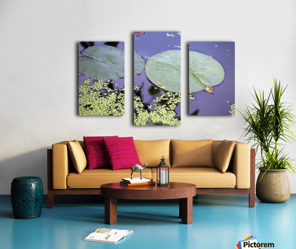 Lily Pads and Duckweed Dow Gardens 2018 Canvas print