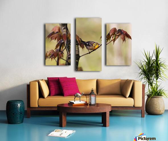Blackburnian Warbler In Maple Tree Canvas print