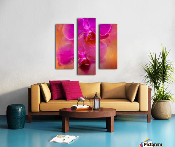 Colorful Phalaenopsis Canvas print
