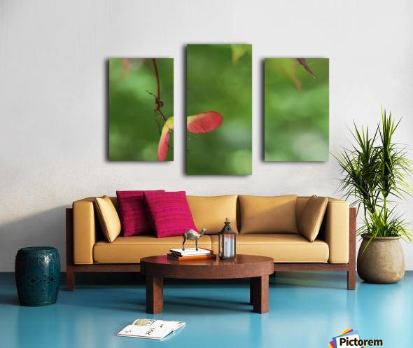 Japanese Maple Seed Canvas print
