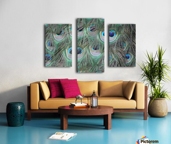 peacock feather pattern plumage Canvas print