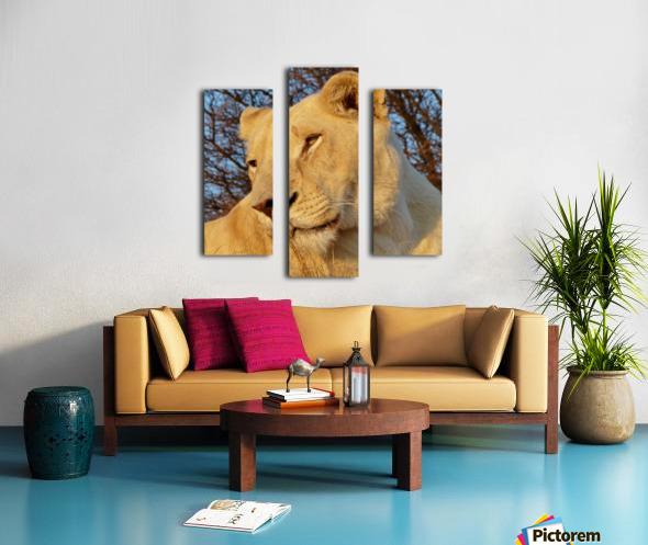 White Lioness Sunset 593 Canvas print