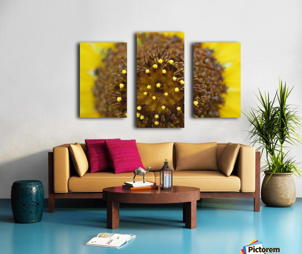 Sunflower Stars Canvas print