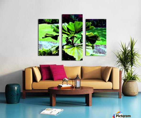 BO902 - Licuala peltata Leaves Canvas print