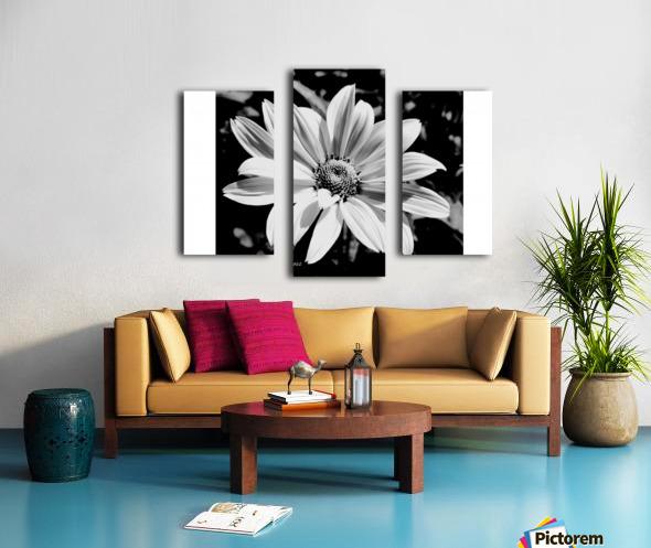 Daisy in bw Canvas print