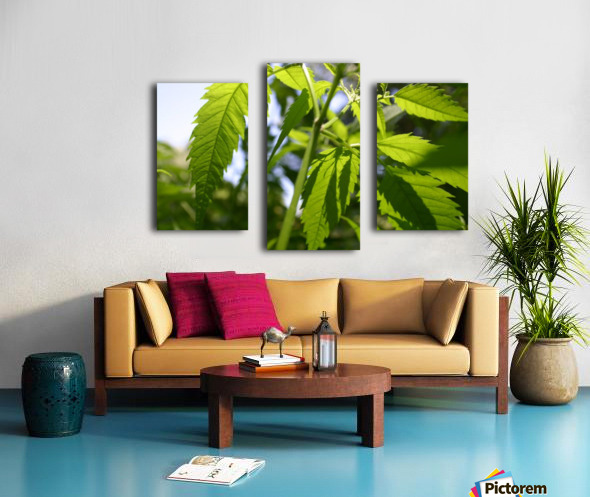 leaf with light Canvas print