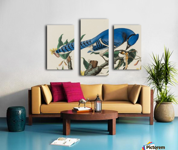 Blue Jay familly Canvas print