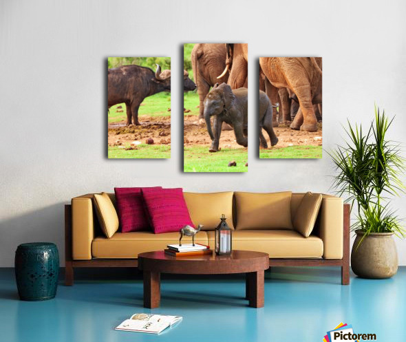 Elephant Baby 582 Canvas print