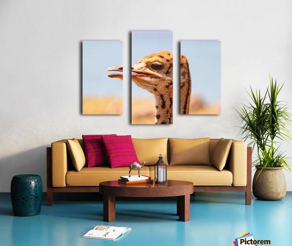 Baby Ostrich 5378 Canvas print