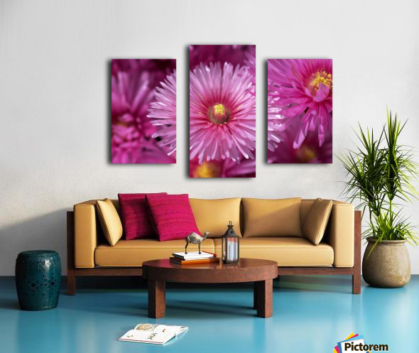Pink Ice Plant Flowers Canvas print
