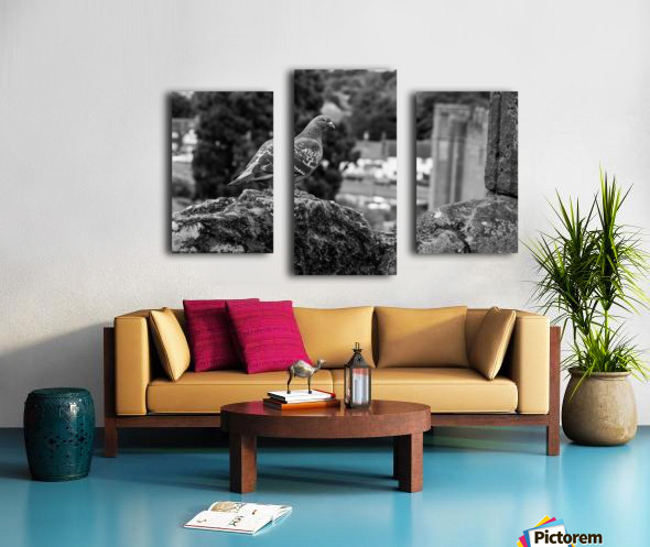 Black and White Pigeon Canvas print