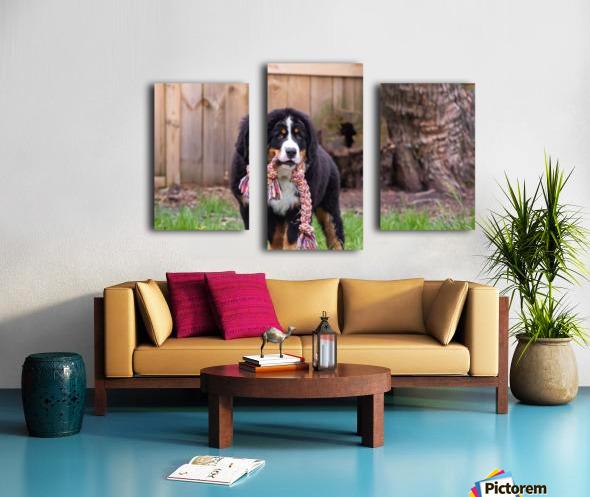 Bernese Mountain Dog Puppy 8 Canvas print