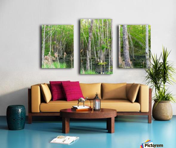 Swamp in Carolina Canvas print
