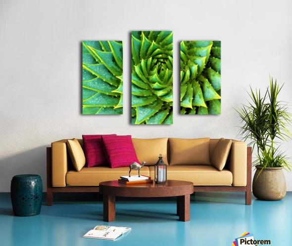 Cactus Spiral Canvas print