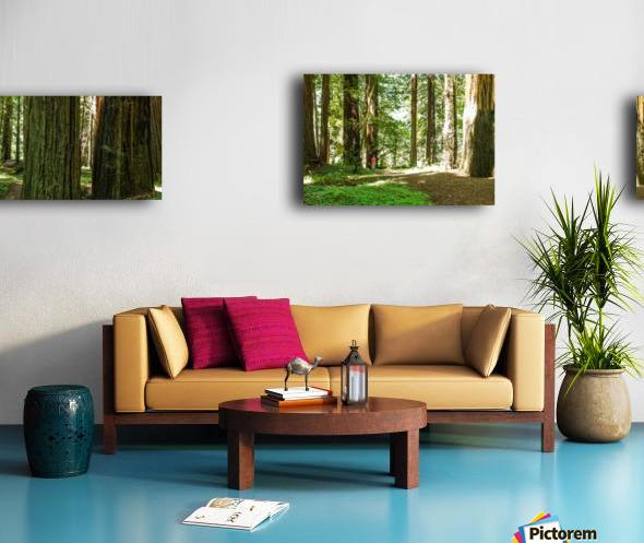 Redwood National Park Canvas print