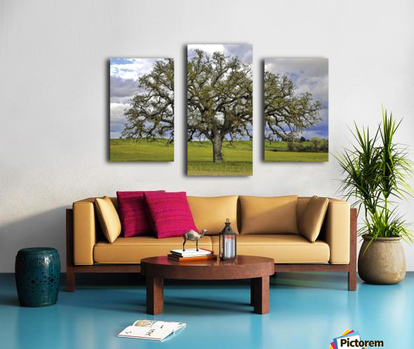 Lone Settler Canvas print