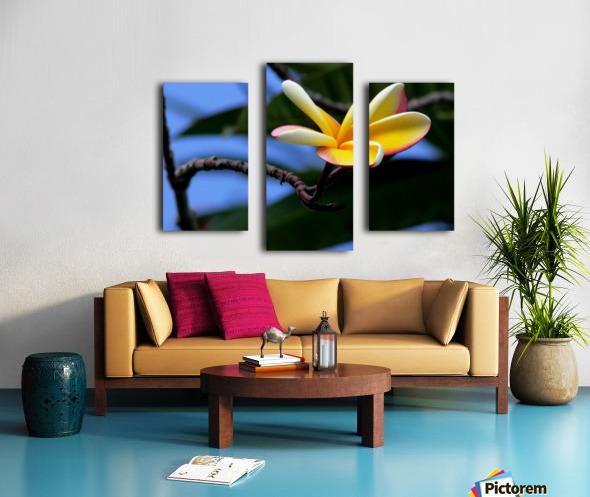 Yellow Plumeria  Canvas print