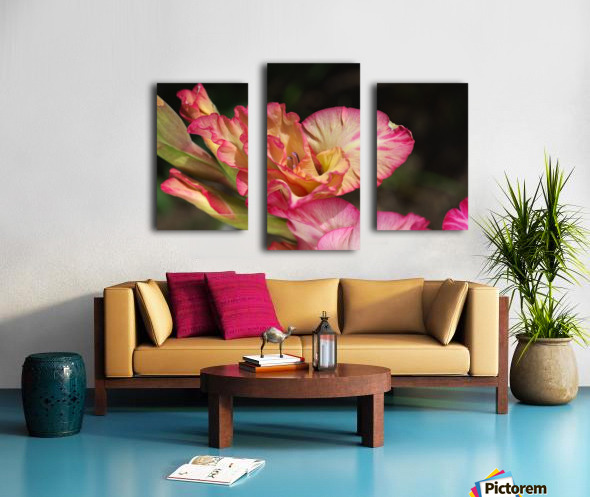 Gladiolus Display Canvas print