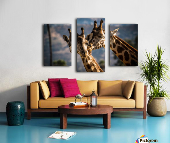 Loving Giraffes Canvas print