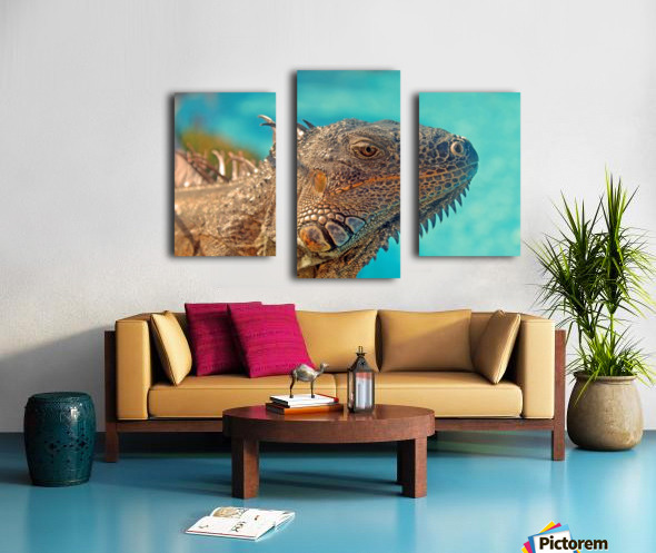 Spiny-Tailed Iguana Canvas print