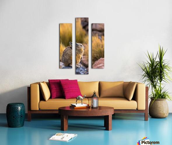 Viscacha Canvas print