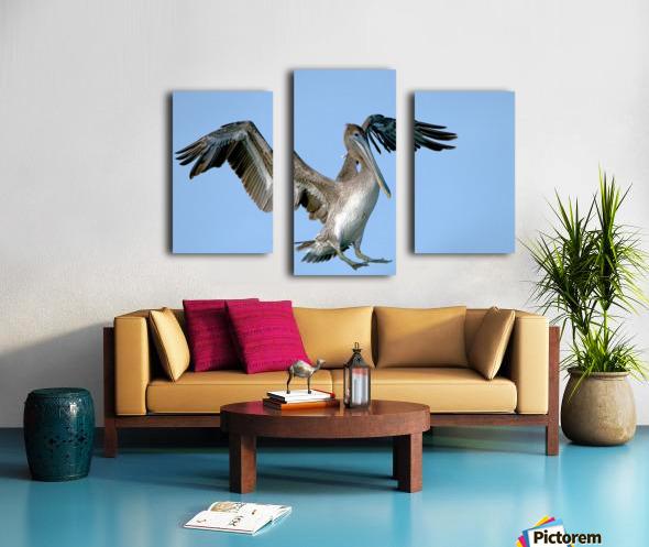 Arriving: Brown Pelican  2509 Canvas print