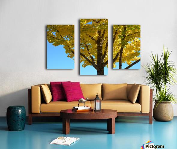 Yellow Fall Foliage Photograph Canvas print