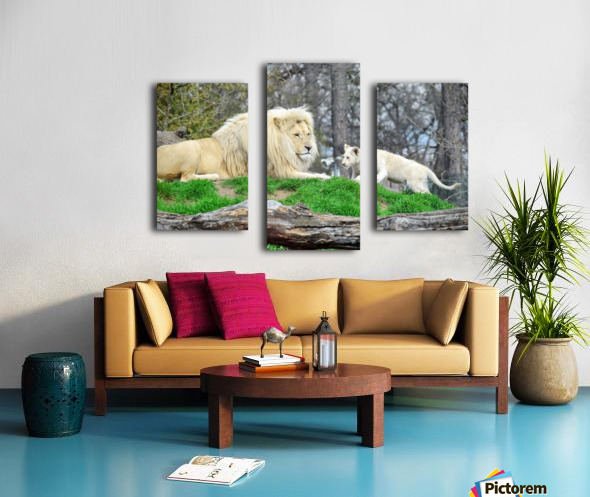 White Lion with Baby Canvas print