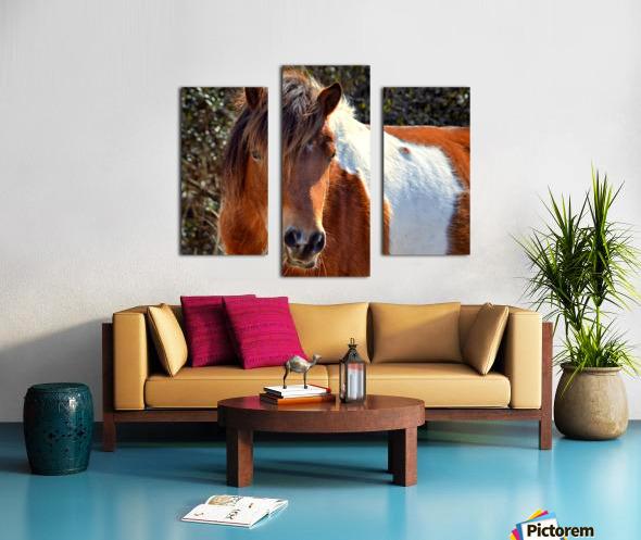 Assateague Pony Ms Macky Canvas print