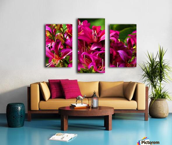 Hong Kong Orchid Canvas print