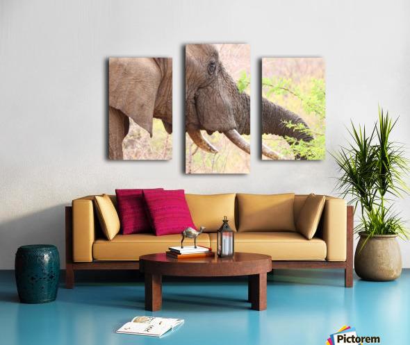 Elefant 6770 Canvas print