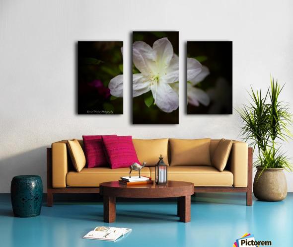 White Azalea  Canvas print