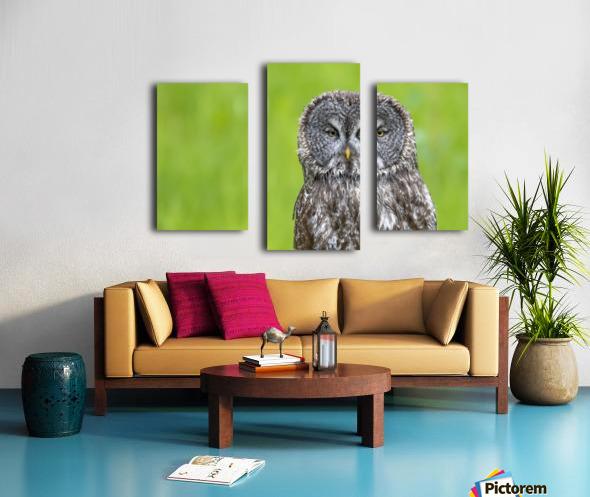 Great Grey Owl - Grey on Green Canvas print