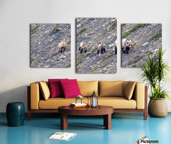 Grizzly Bear Family - Walk this way.  Kananaskis Country Alberta. Canada Canvas print