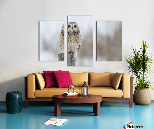 Short Eared Owl - Wink Canvas print